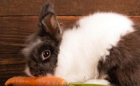 Bunny-1024