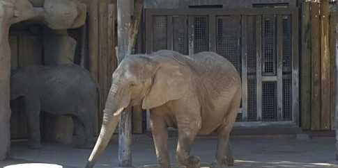 HogleZooElephants