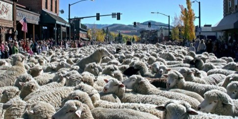 Ketchum+Trailing+of+the+Sheep_1024