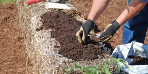 Planting_a_Straw_Bale_Garden