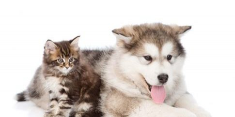 kitten-and-pup