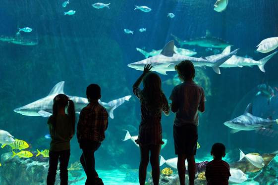 Loveland Living Planet Aquarium Offering Veterans Free Admission for Veterans Day