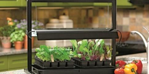 Grow_lights_help_Veggies_Flourish_indoors