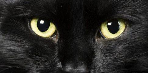 black-cat[1]