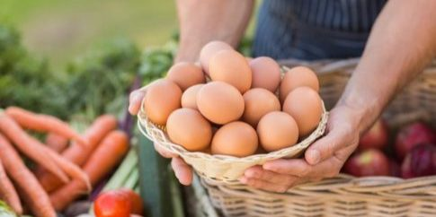 farmer-hands-holding-a-basket-of-eggs[1]