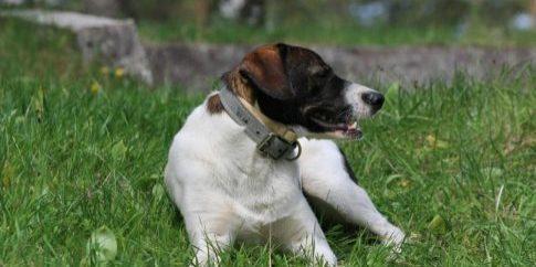 mongrel-dog[1]