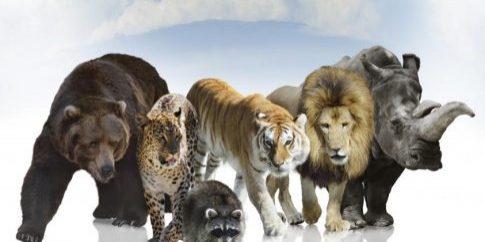 wild-mammals[1]