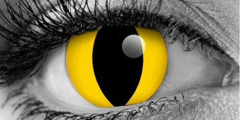 yellow-cat-eyes