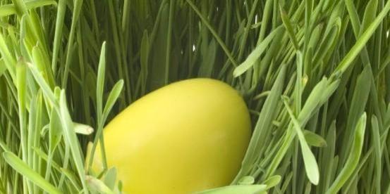 yellow-easter-egg[1]