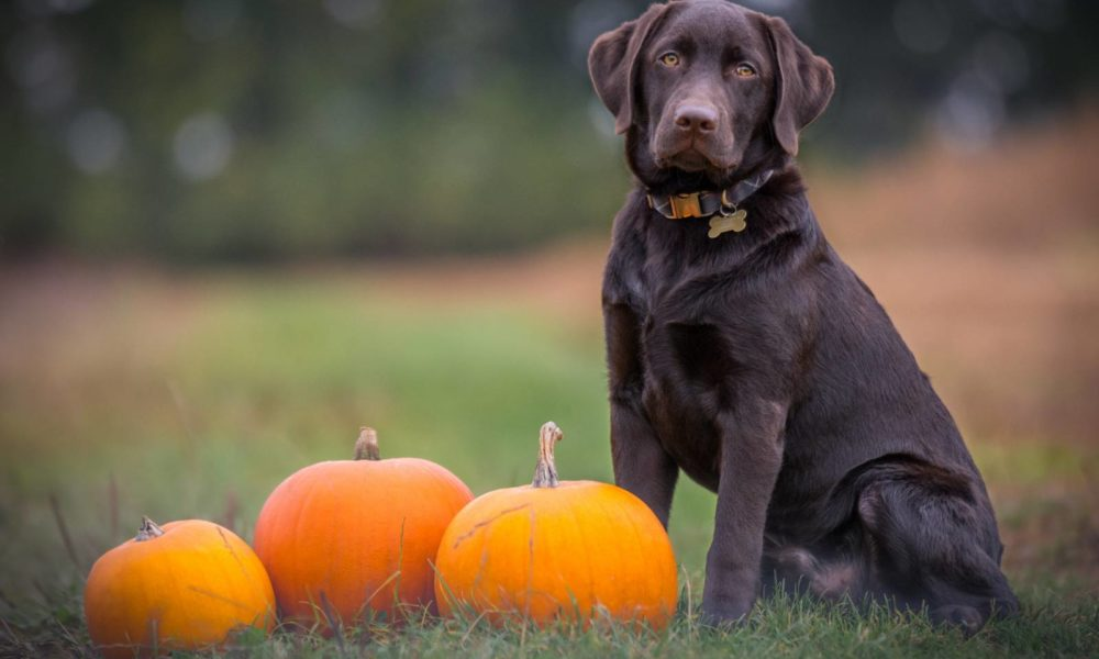 Halloween Safety Tips for Pets fron Utah Humane Society