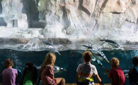 Veterans Day at the Loveland Living Planet Aquarium
